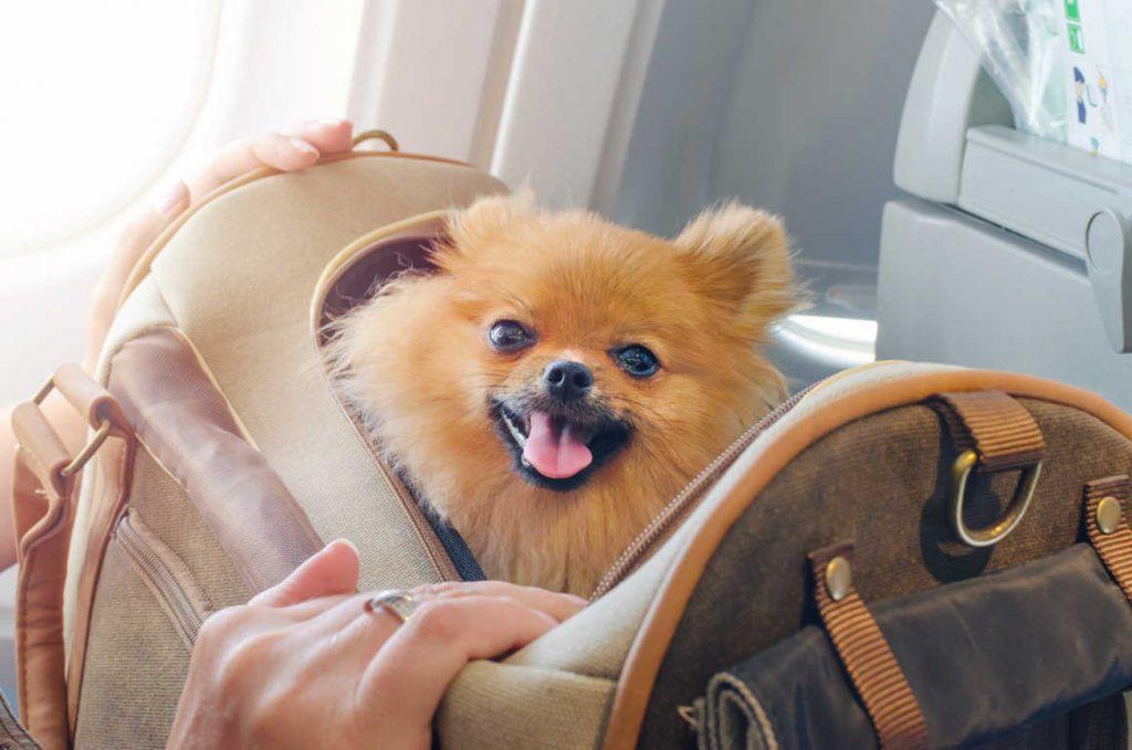 Viajando con animales