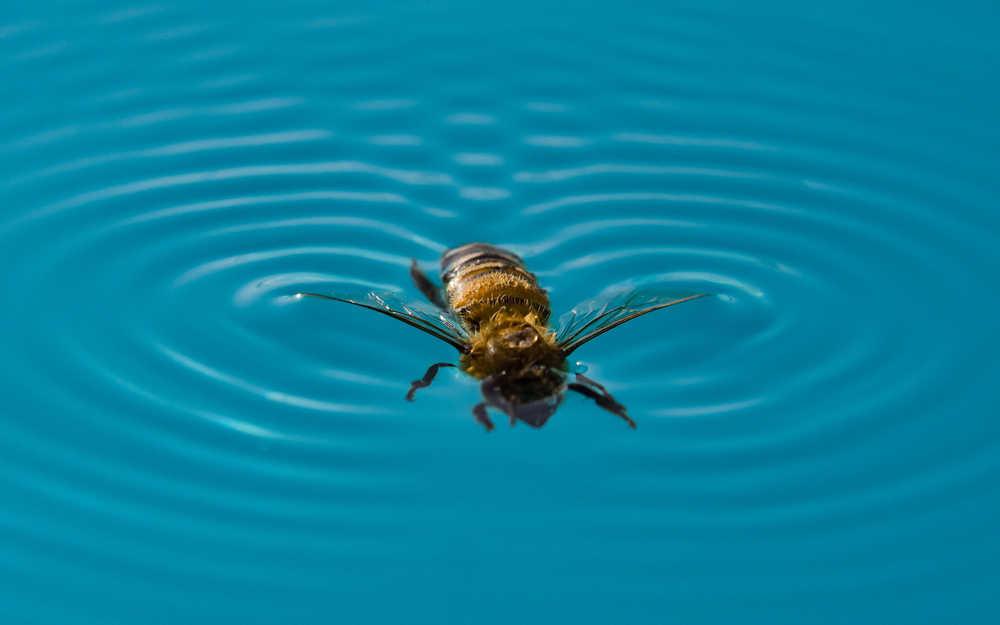 Descubre como mantener tu piscina libre de plagas durante el verano